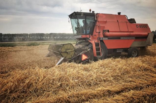oude graanrassen voor meer biodiversiteit
